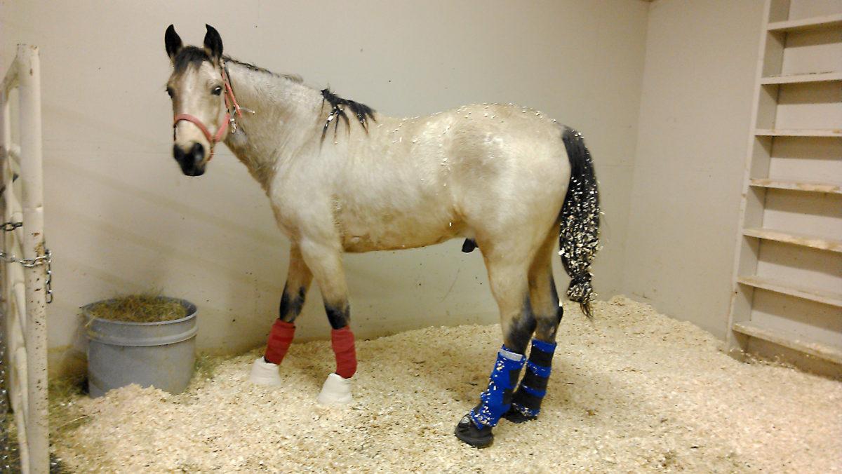 Hospitalized horse